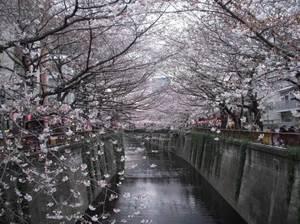 Nakameguro_040311_1