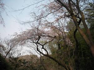 Todoroki_040211