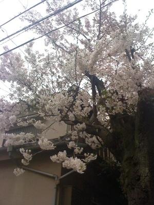 Yutenji_040911_1