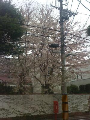 Yutenji_040911_2