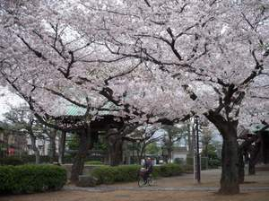 Yutenji_temple_040911_3